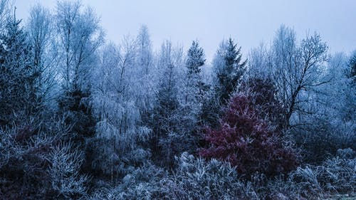 Kostenloses Stock Foto zu bäume, eis, schnee, winter