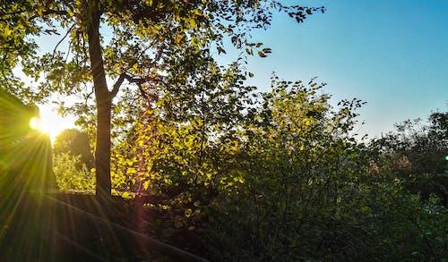 フィールド, 太陽, 日光, 木の無料の写真素材