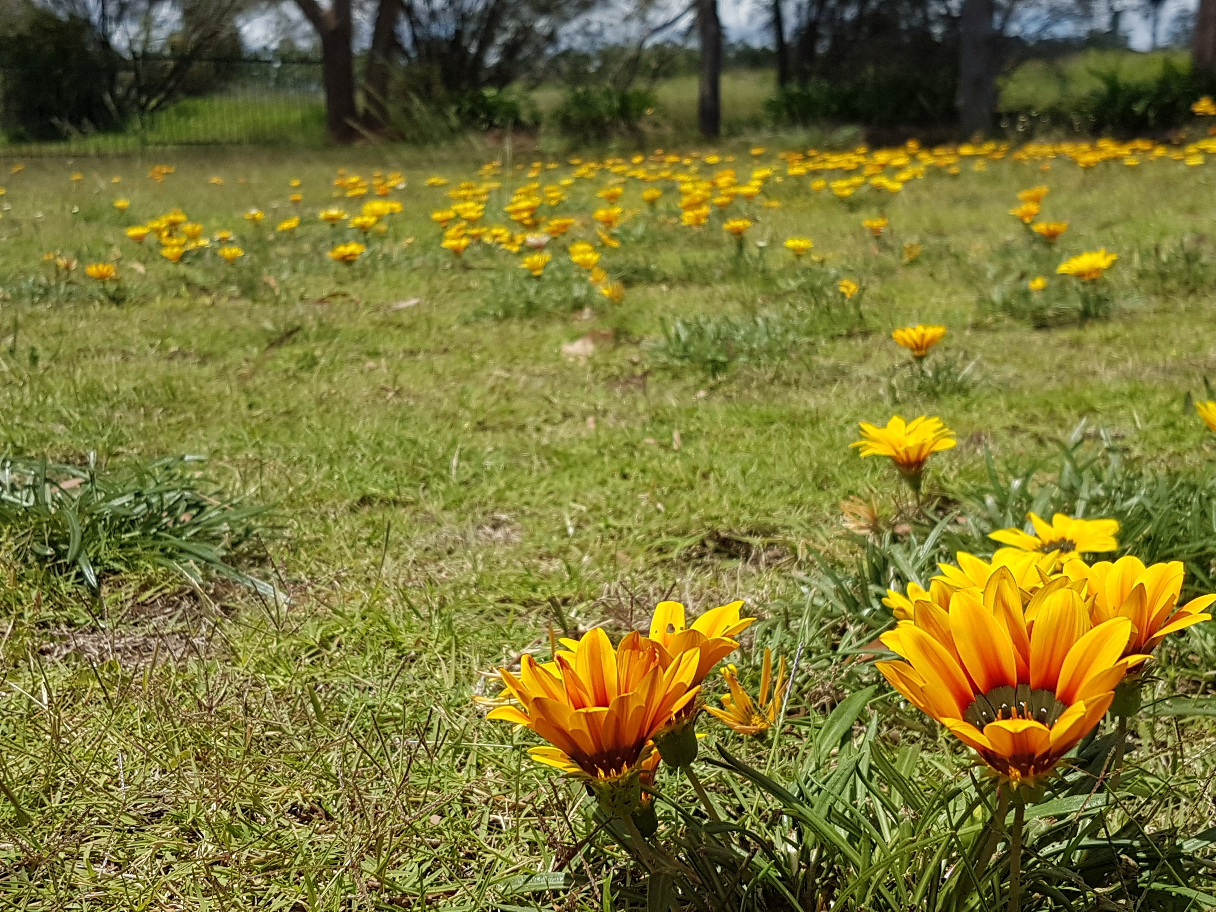 Free stock photo of breakout, flowers, garden, grass