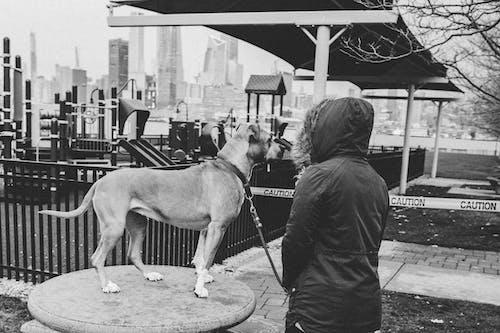 Δωρεάν στοκ φωτογραφιών με casual, labrador, αναψυκτικό