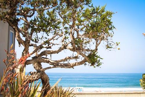 Immagine gratuita di albero, natura, oceano, oceanside