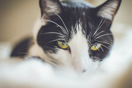 Free stock photo of cat, cat face, cat's eyes