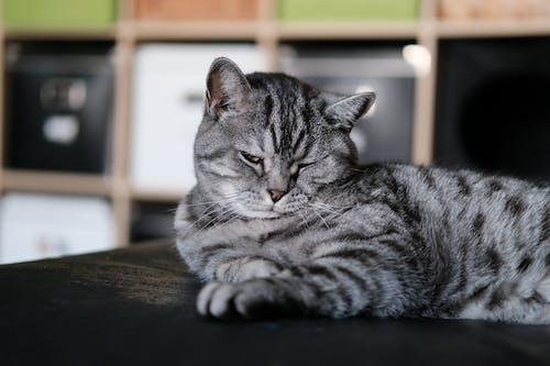 Free stock photo of animal, cat, curiosity