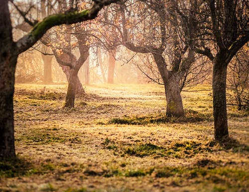 Ảnh lưu trữ miễn phí về ánh sáng ban ngày, ánh sáng mặt trời, bình minh, cây