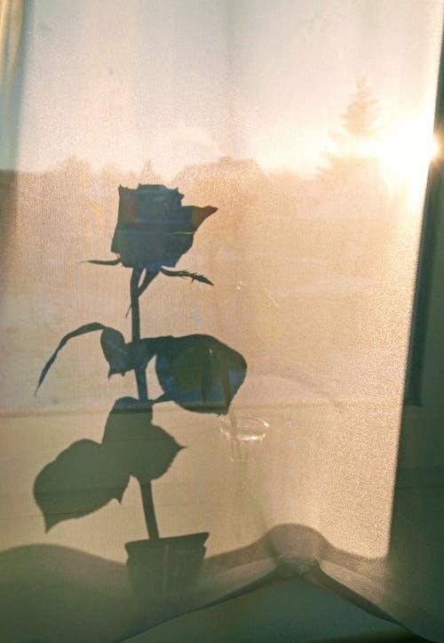 Gratis lagerfoto af aroma, blad, blomst