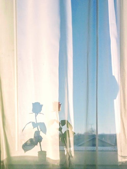 Gratis lagerfoto af aroma, blå himmel, blad