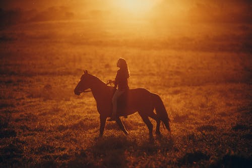 Side view of anonymous female riding horse on fresh grass in field in sunny summer weather