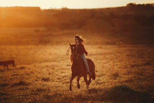 Full body of female equestrian riding brown horse on grassy terrain in countryside on evening time during horseback training in nature