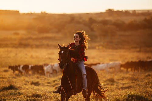 Full body of positive female equestrian riding horse on grassy terrain in rural area during horseback training in sunny nature