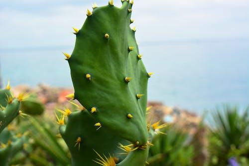 Free stock photo of close up, dahlia, flower
