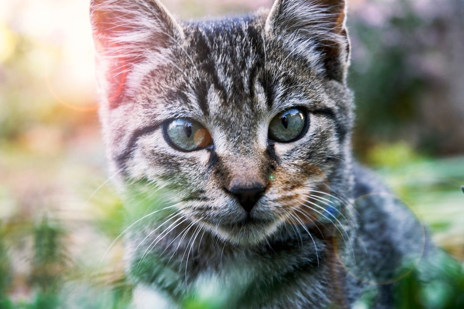 Close-Up Photography of A Tabby Cat
