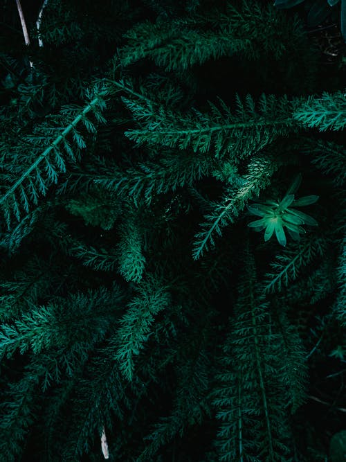 Lush fresh fern bush with healthy green leaves growing in forest in daytime