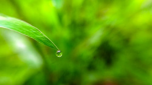 Free stock photo of after the rain, day, grass