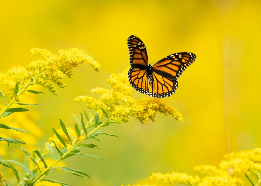 Free stock photo of bright, butterflies, butterfly