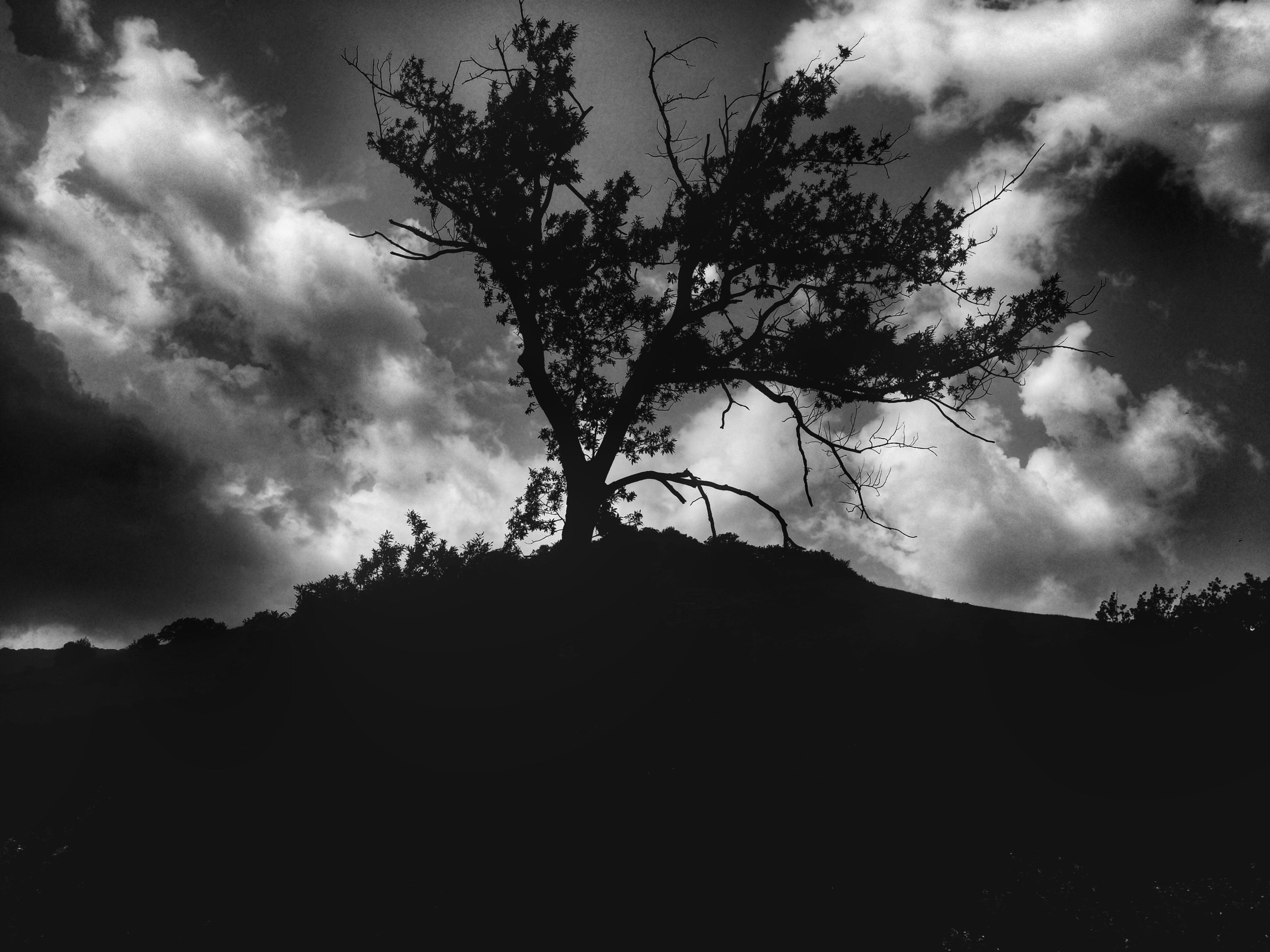 Free stock photo of black and white, nature, tree