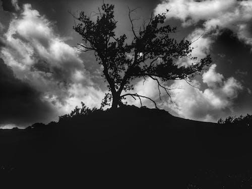 블랙 앤 화이트, 자연의 무료 스톡 사진