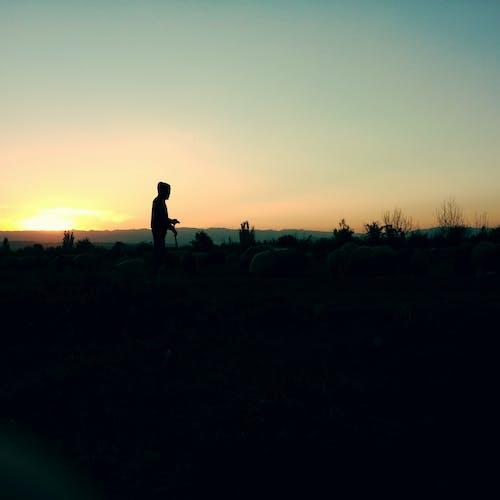 셰퍼드, 햇빛을 받치다의 무료 스톡 사진