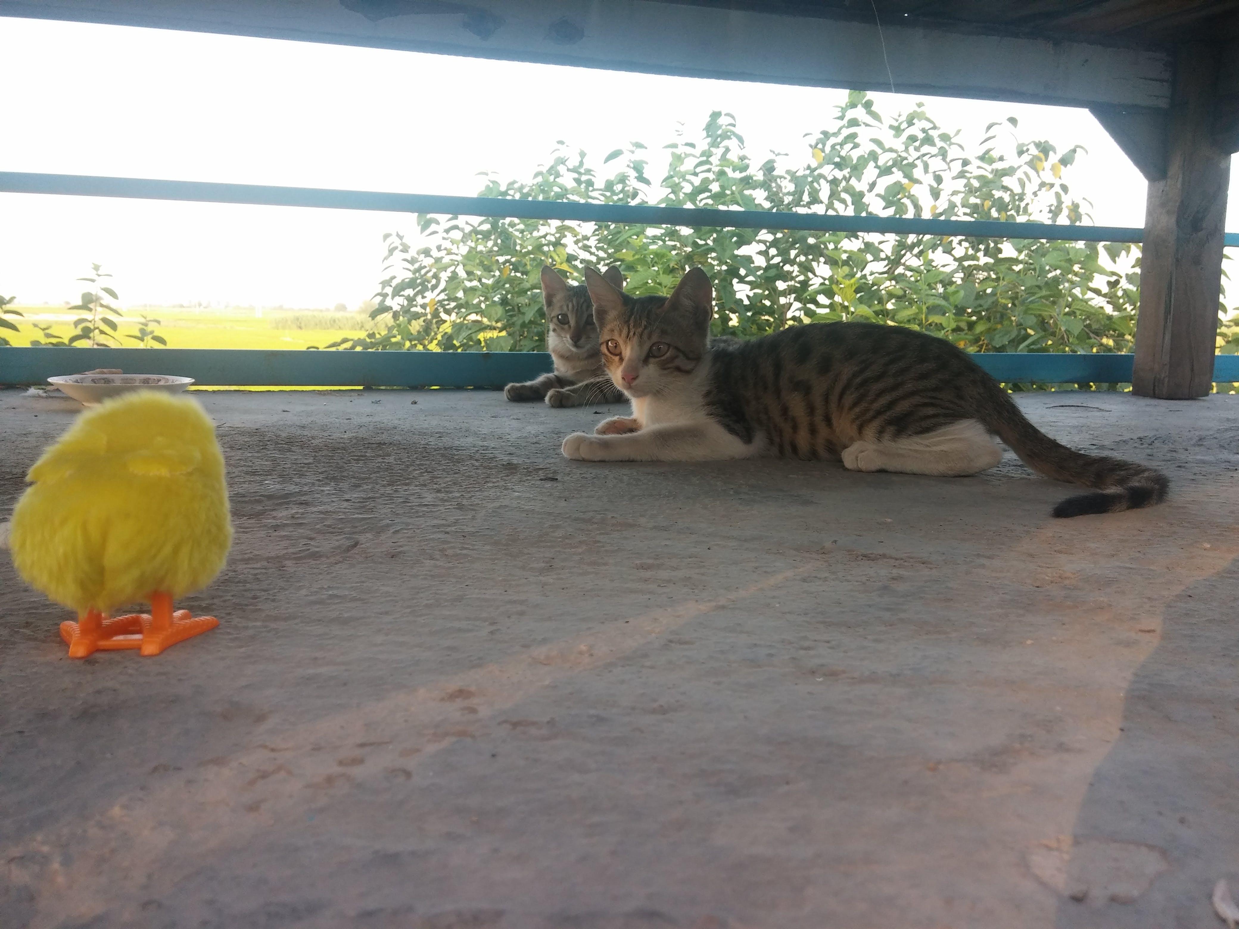 Foto d'estoc gratuïta de divertit, gats