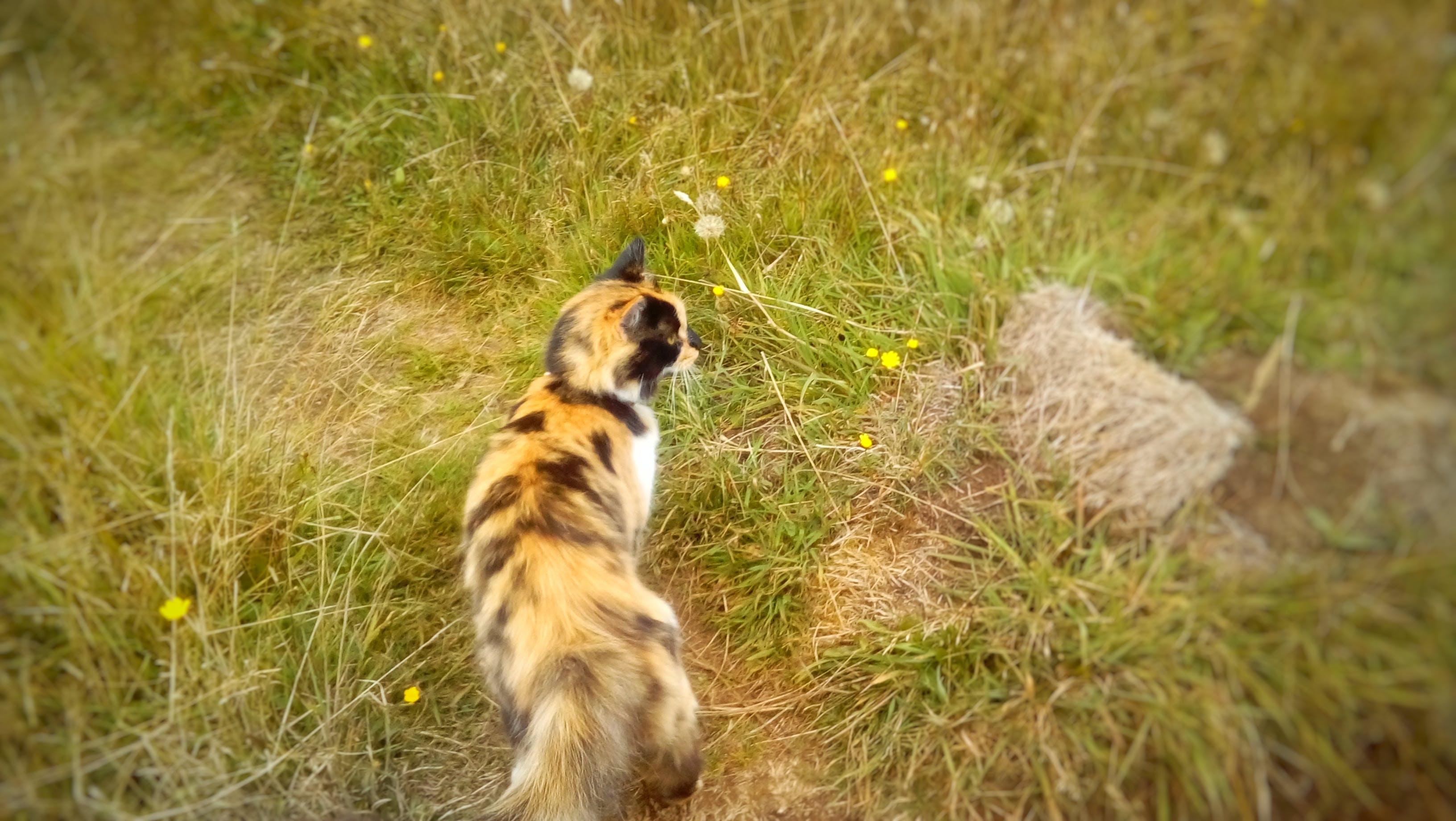 Free stock photo of cat, grass, nature