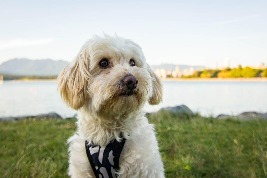 Ilmainen kuvapankkikuva tunnisteilla eläimet, kesä, koira