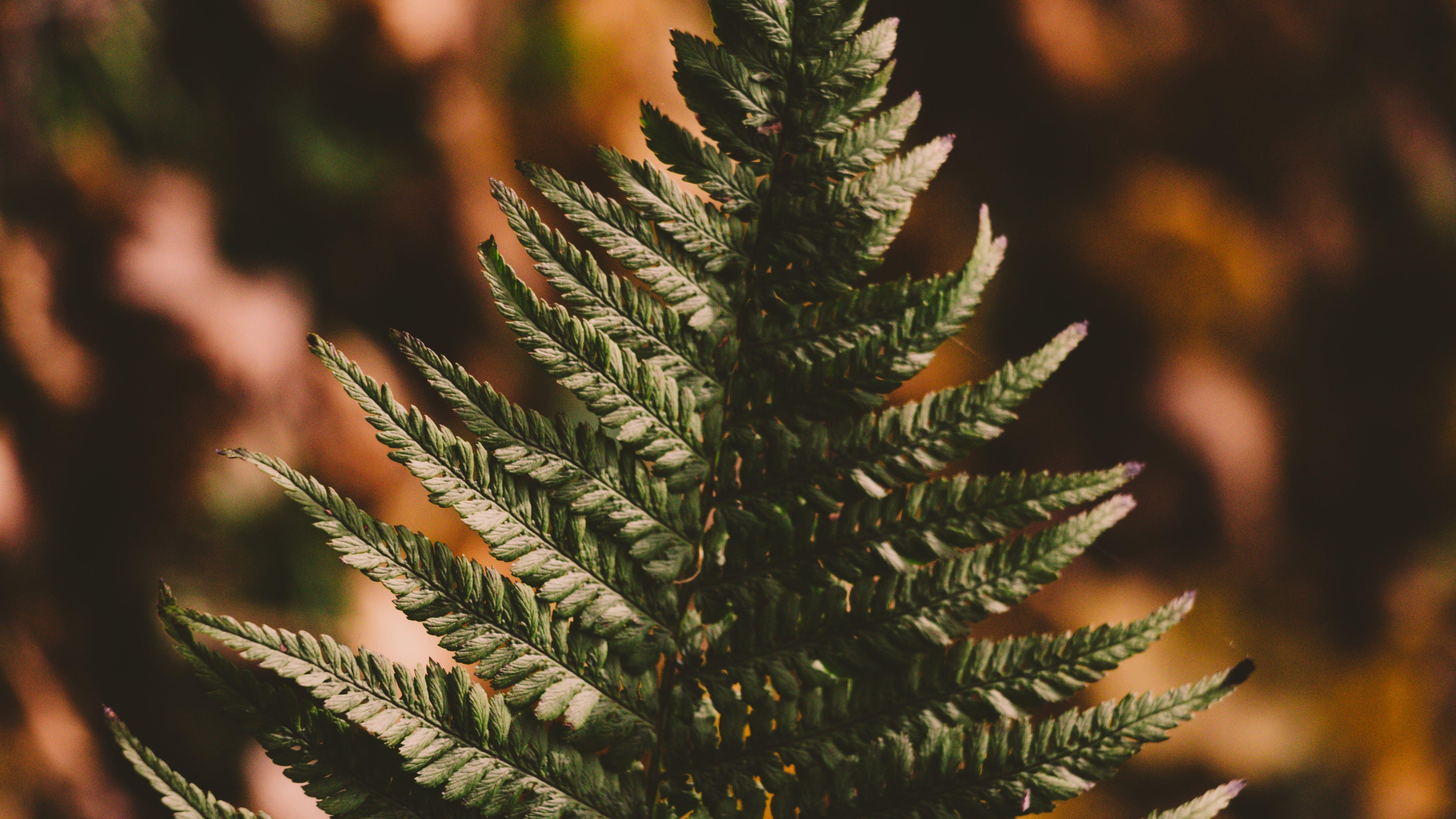 ぼかし, パターン, 成長, 環境の無料の写真素材
