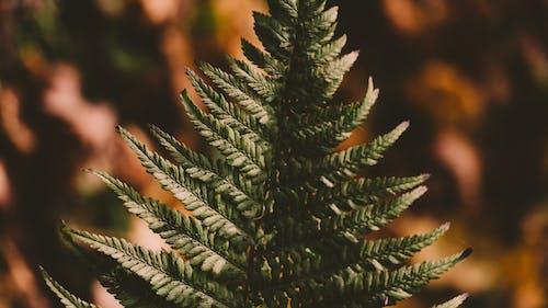 Gratis lagerfoto af close-up, farver, grøn, luftslør