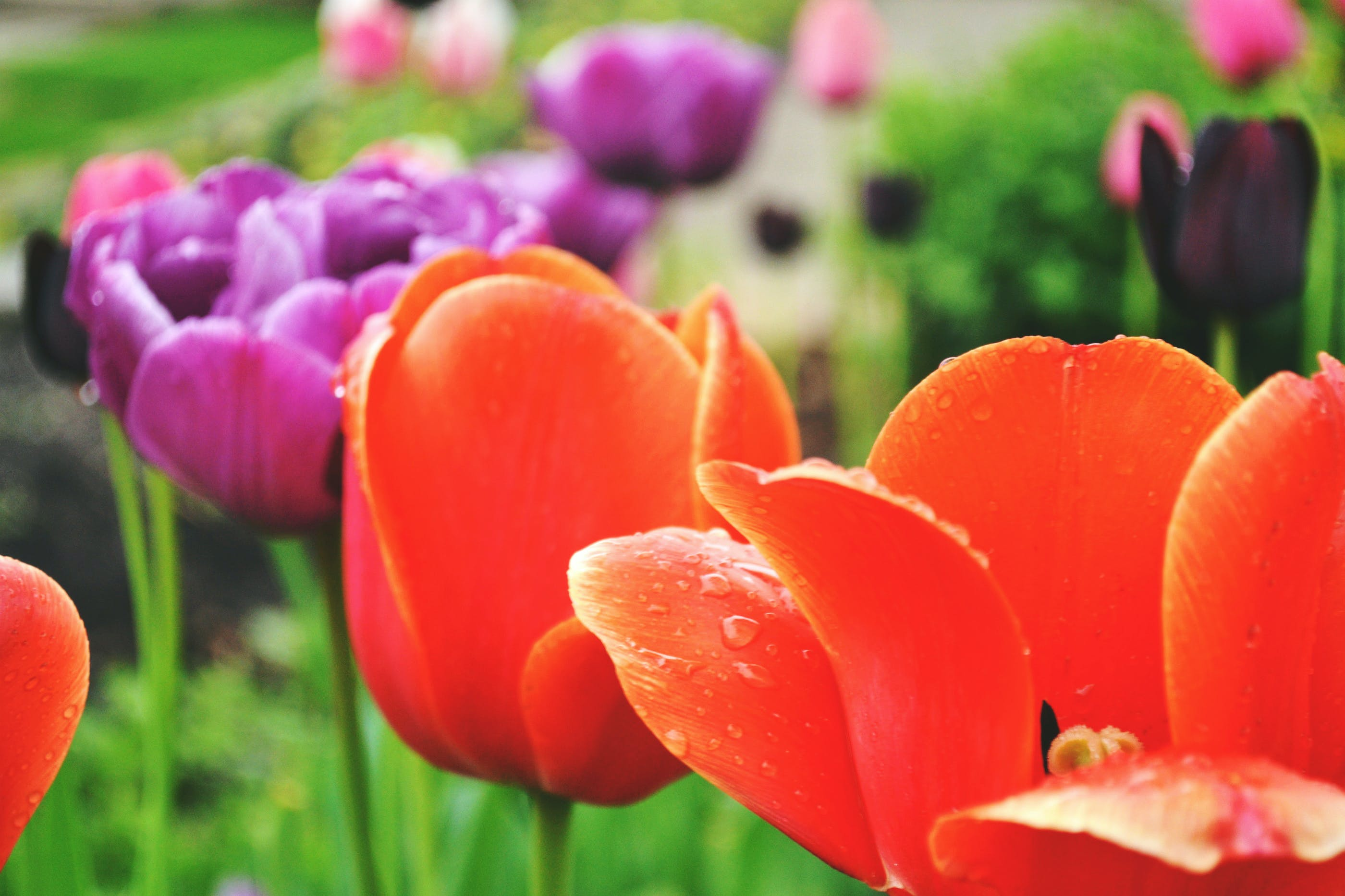 Selective Photo of Orange Tuli