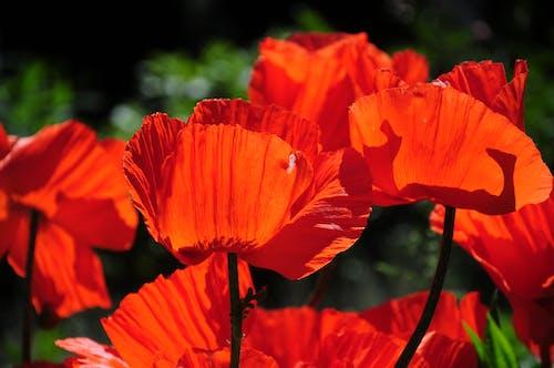 Photos gratuites de belle fleur, brillant, centrale