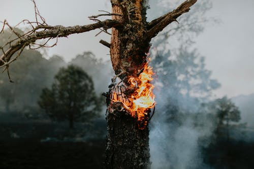Fire on Brown Tree Trunk