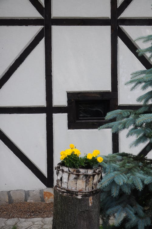 Fotos de stock gratuitas de blanco y negro, flor amarilla, flores
