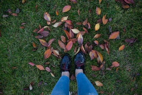 Foto stok gratis alam, Daun-daun, dedaunan, di luar rumah