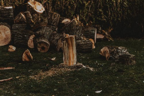 Heap of cut wood with dry and rugged bark on lawn with sawdust in daylight