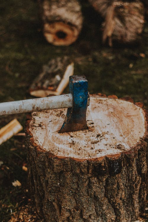 Ax with metal blade in cut tree trunk with rugged bark in daytime on blurred background
