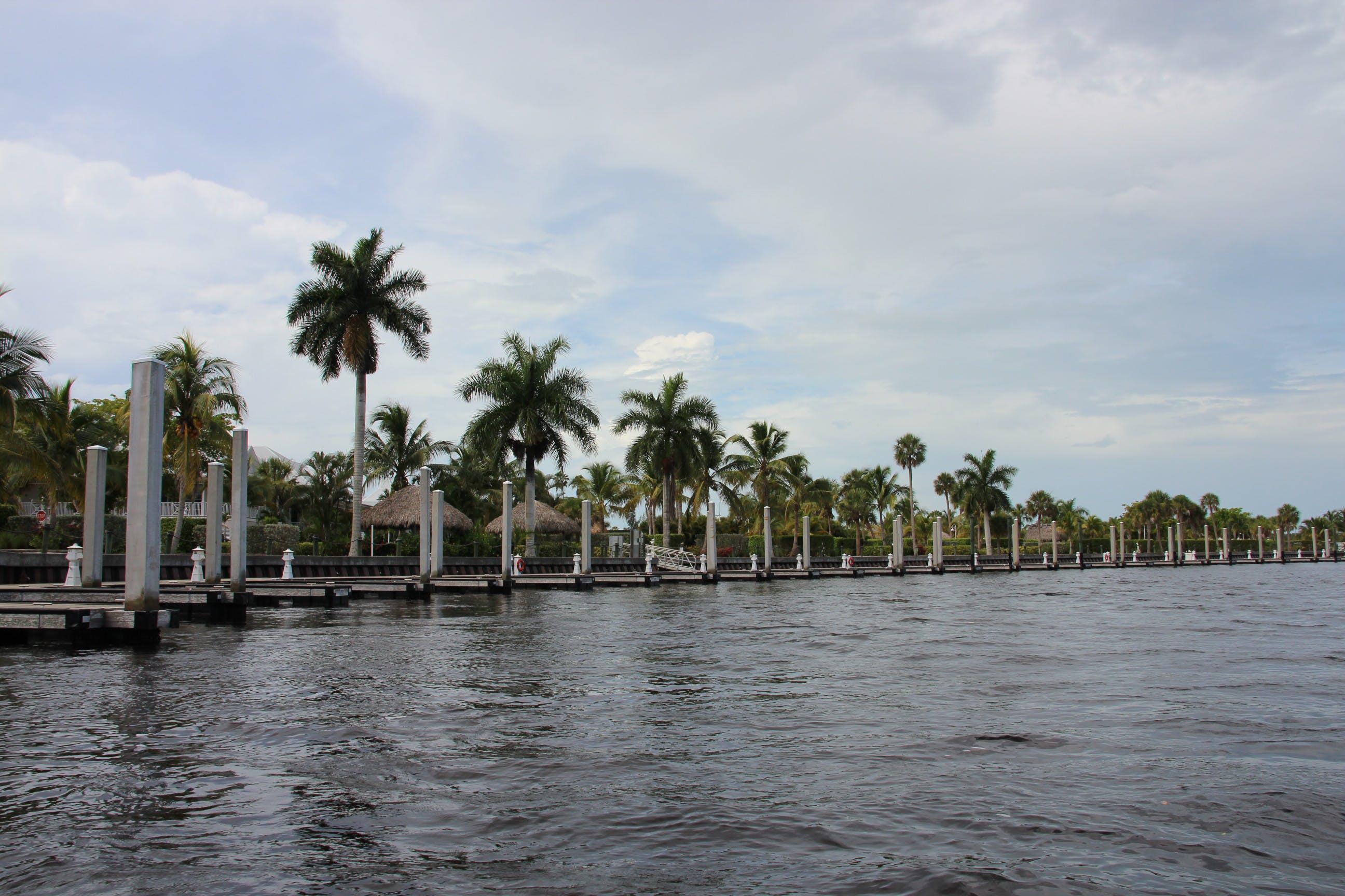 Free stock photo of palms