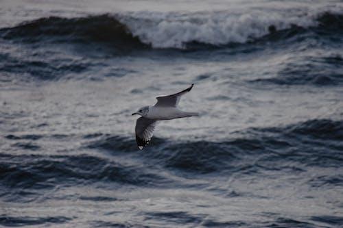 Foto profissional grátis de à beira-mar, ação, água