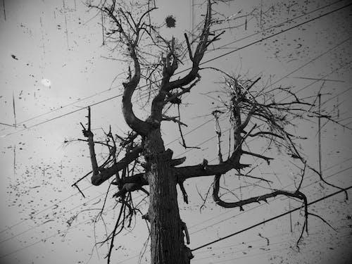 Free stock photo of árbol, BLANCO Y NEGRO, fotografia