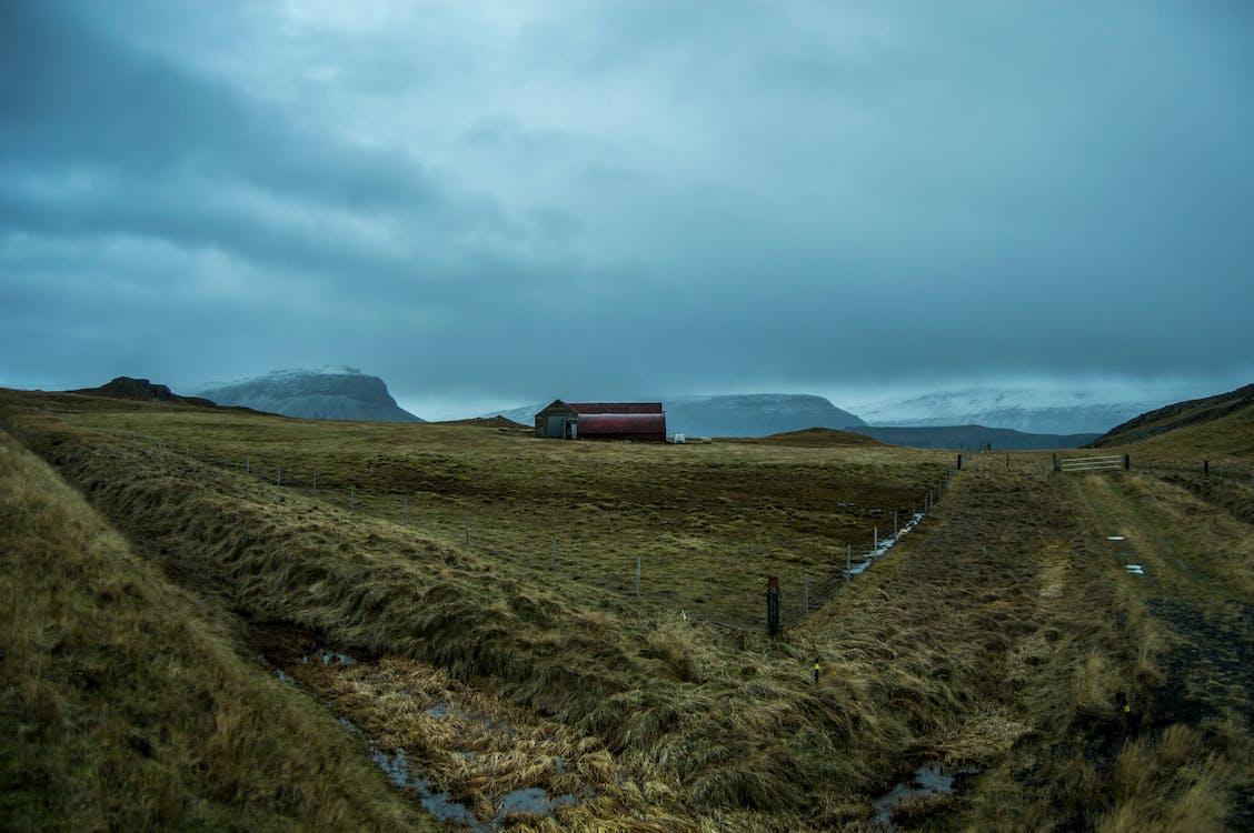 frig, gripă, islanda
