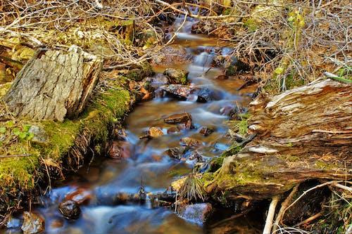 Kostenloses Stock Foto zu felsen, fließen, holz, landschaft