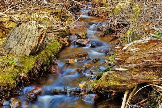 Water Stream on Creeks
