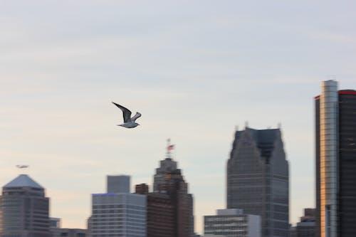 Ảnh lưu trữ miễn phí về bầu trời, bay, hải âu, thành phố