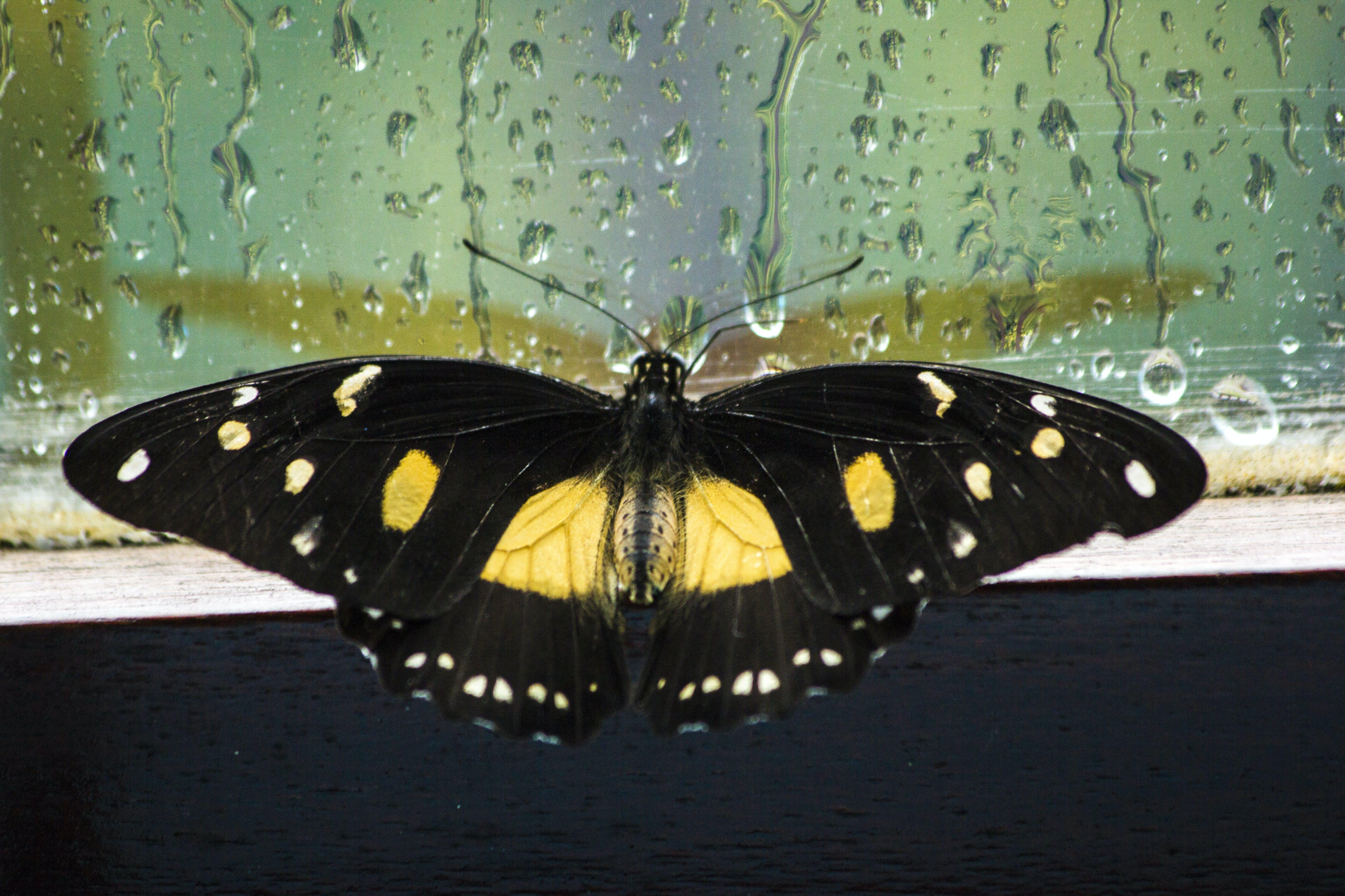 Free stock photo of butterfly, nature, raindrops, rainy