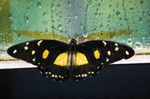 나비, 빗방울, 자연의 무료 스톡 사진