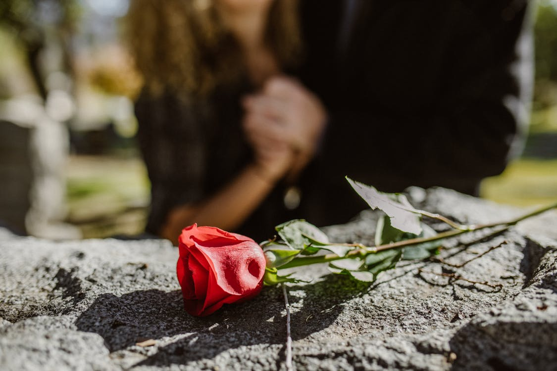 Red Rose on Gray Rock