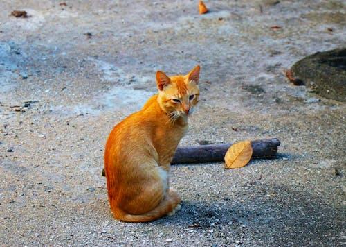 Foto stok gratis kucing cantik