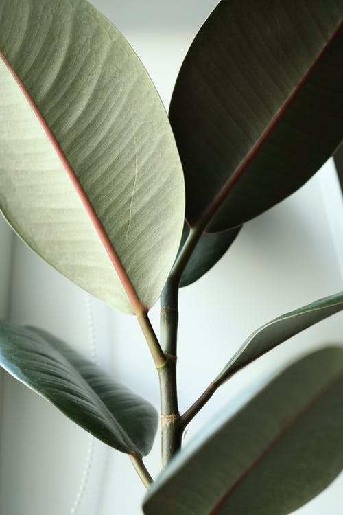 Green Leaves of a Plant in Close Up Photo