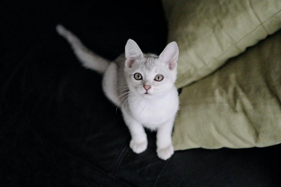 White Cat on Black Textile
