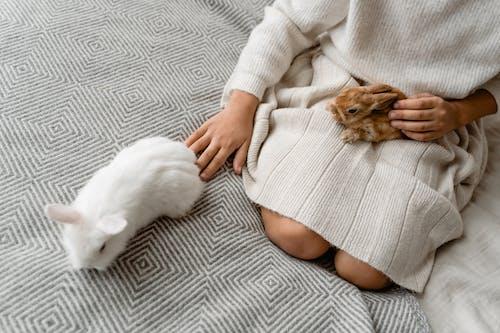 White Cat on Womans Lap
