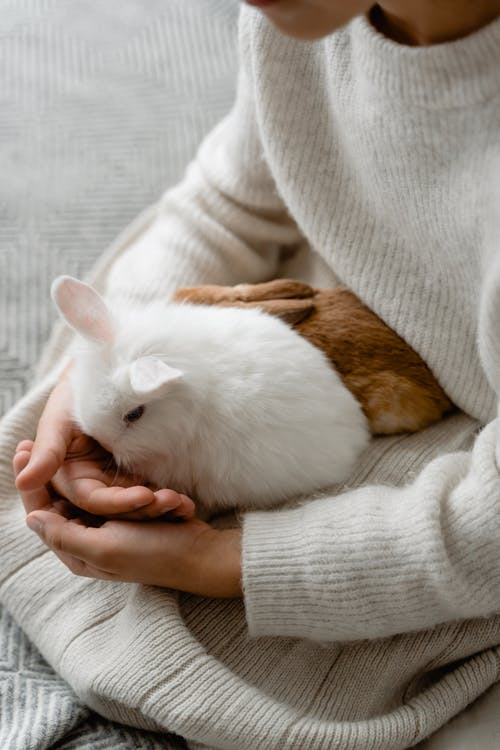 White and Brown Rabbit on Persons Lap