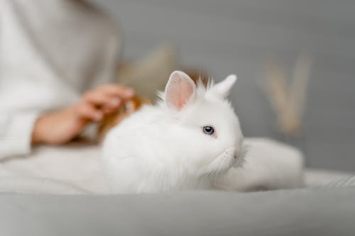 White Rabbit on White Textile