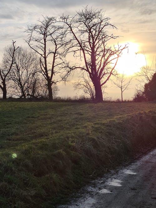 Free stock photo of backlight, bare trees, evening sun